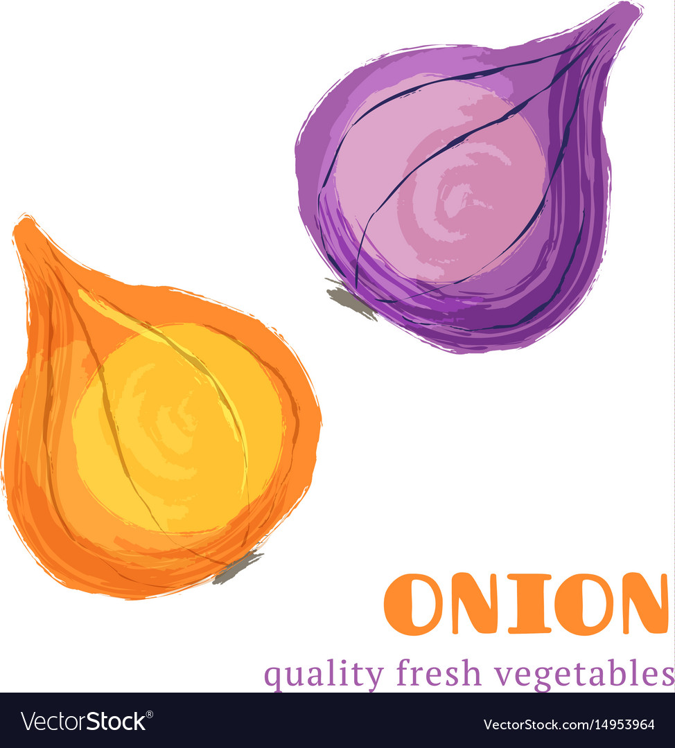 Fresh onion isolated on white background vector image