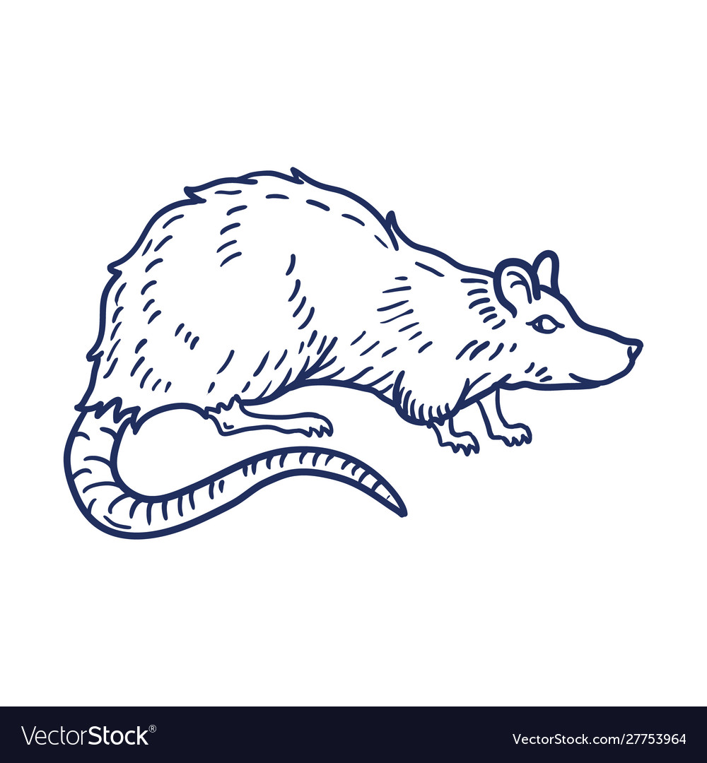 Rat or mouse hand drawn on white background