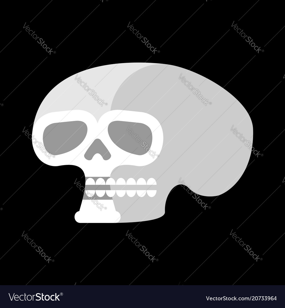 Skull isolated head of human skeleton anatomy Vector Image