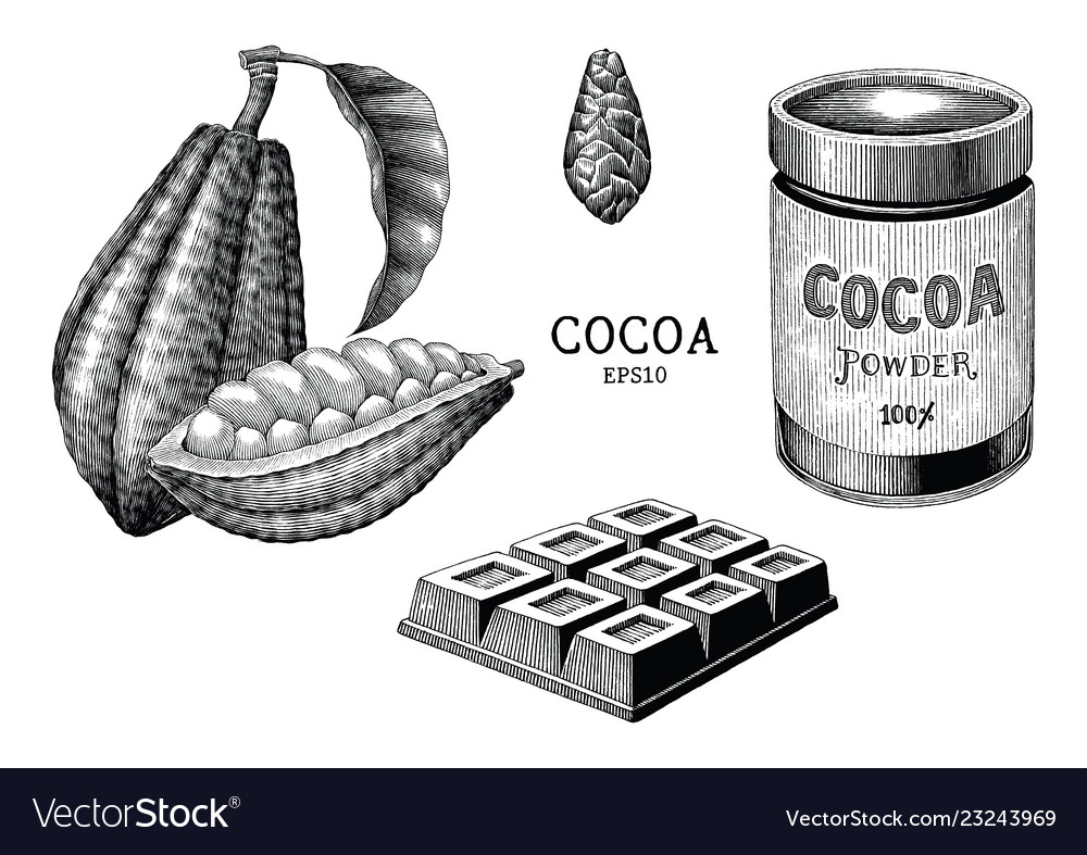 Cocoa plant and product hand draw vintage