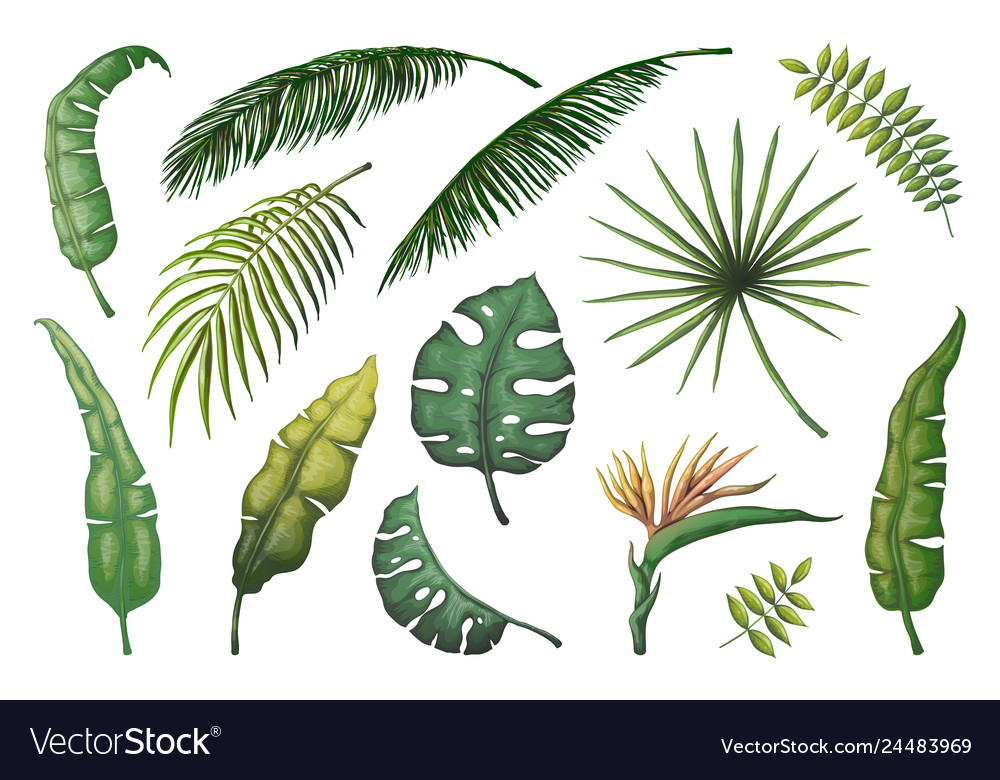 Palm leaves jungle hand drawn trees floral