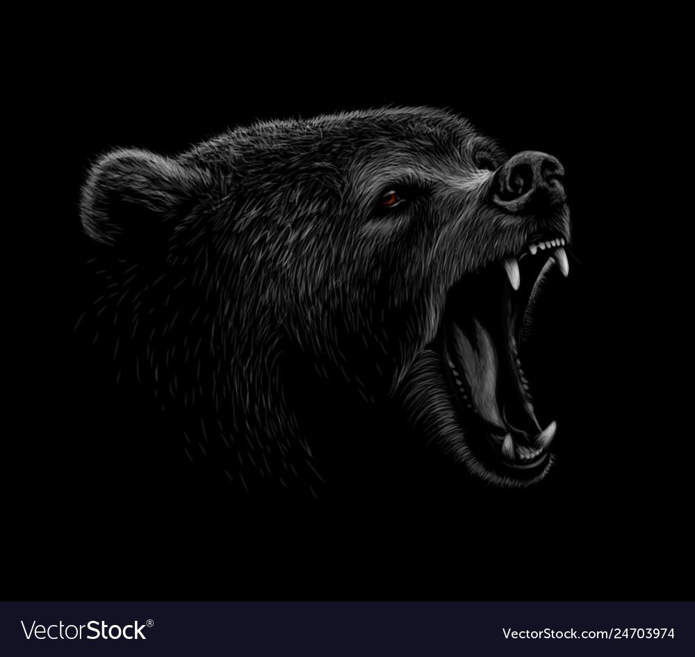 Portrait of a brown bear head on a black
