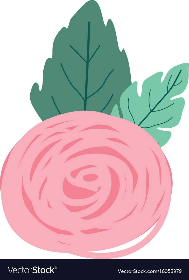 Hand drawing pink color of bud rose flower with