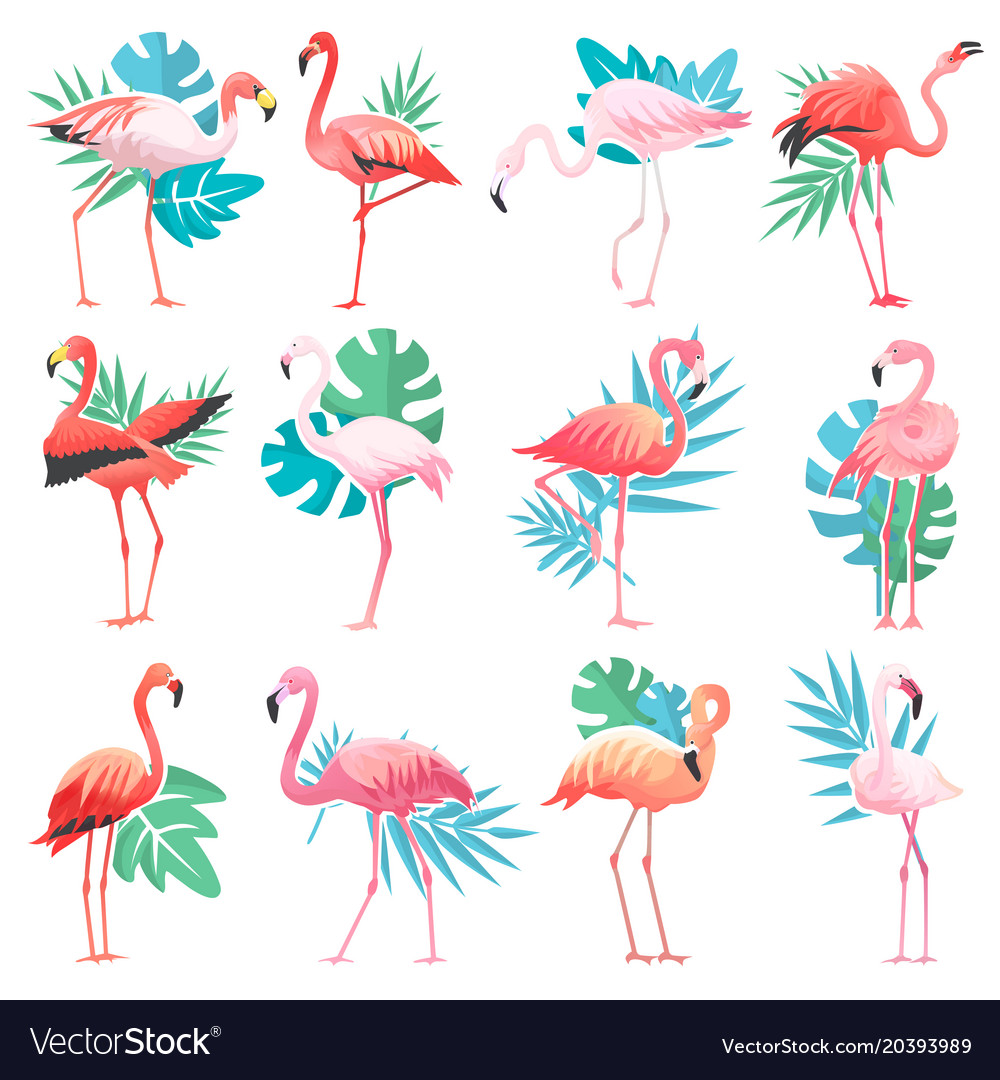 Pink Flamingos And Exotic Vector Image