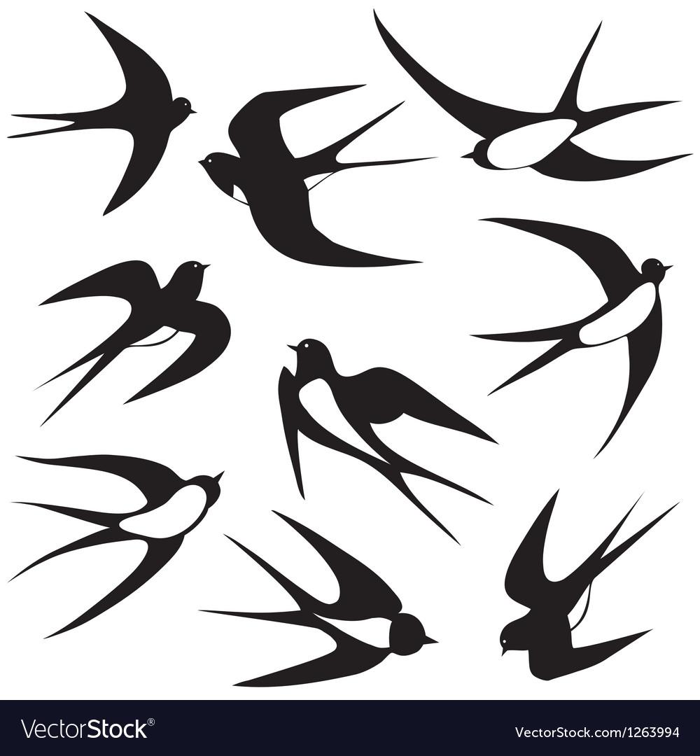 Bird swallow set poses