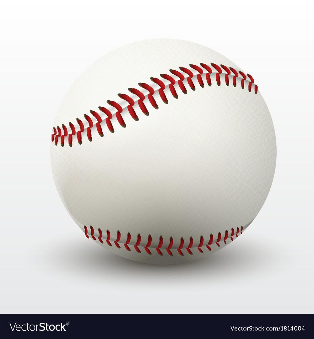 Baseball leather ball vector image