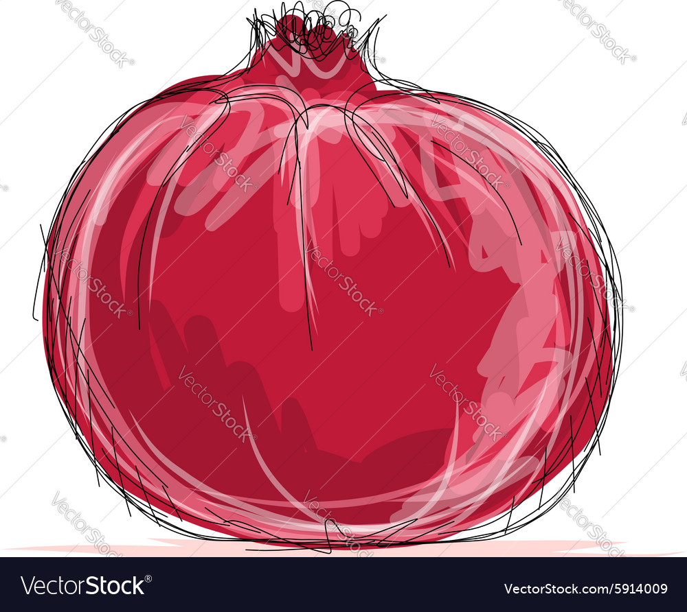 Sketch of pomegranate for your design