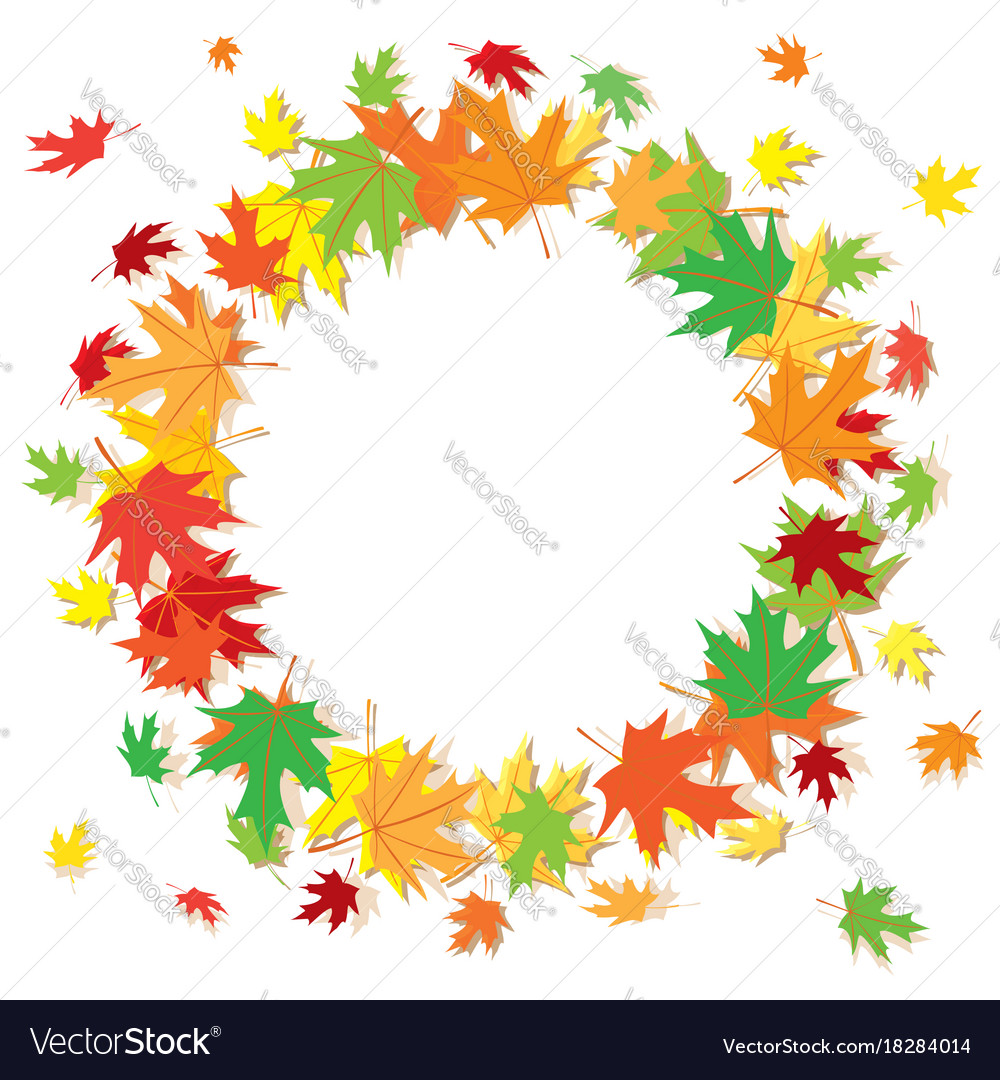 Colorful maple leaves on white background - frame Vector Image