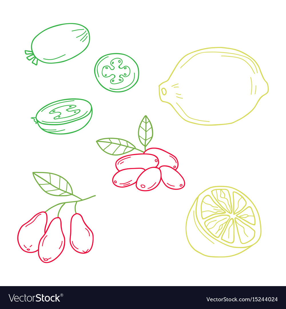Hand drawn sketch fruits - pineapple guava lime