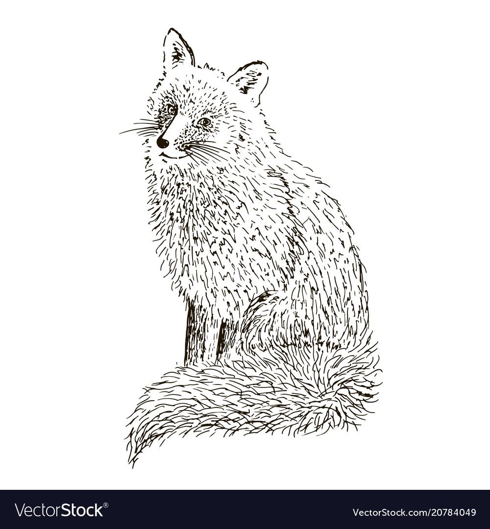 Fox sketch set hand drawn vector image
