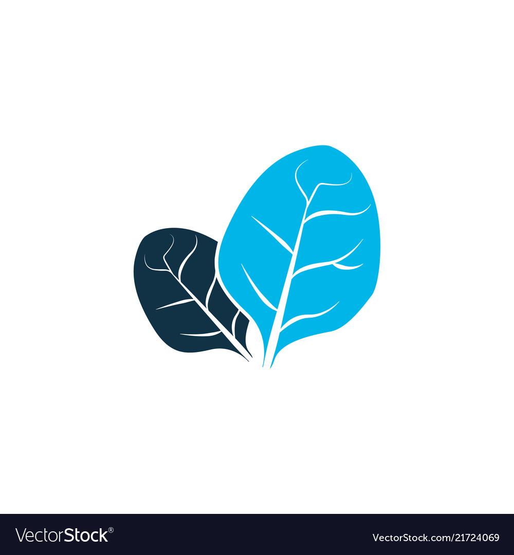 Sorrel icon colored symbol premium quality