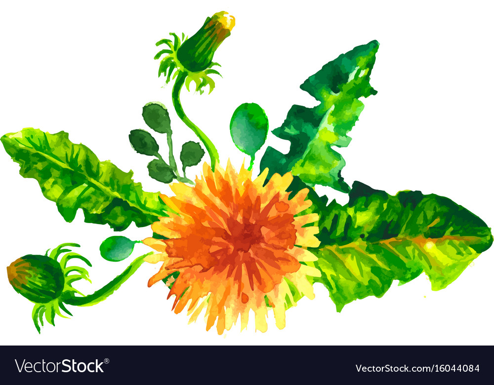Flowers dandelions watercolor