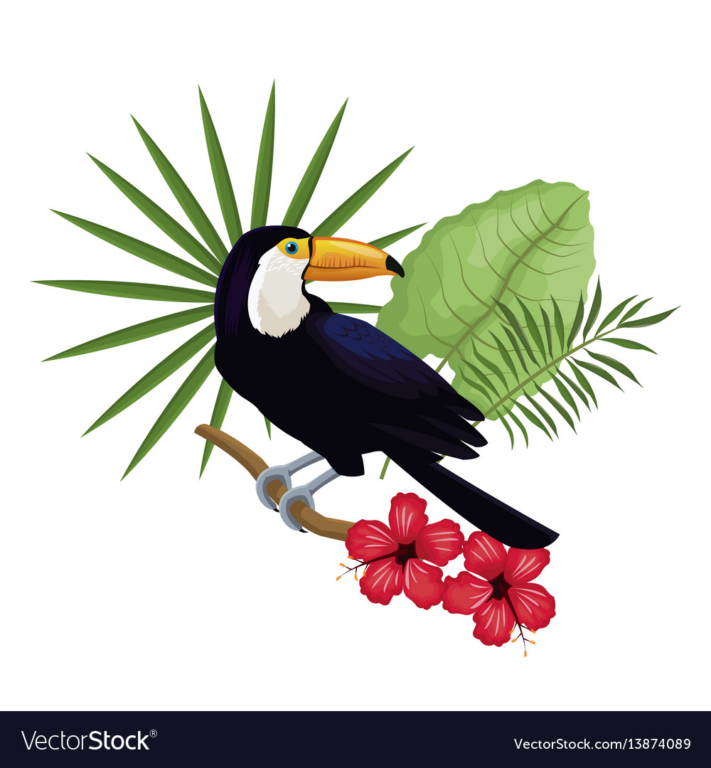 Toucan hibiscus branch palm leaves