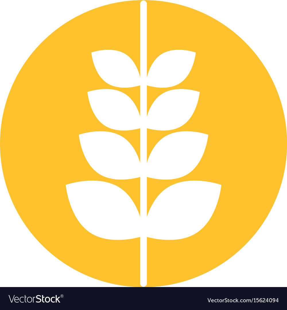 Spike wheat isolated icon
