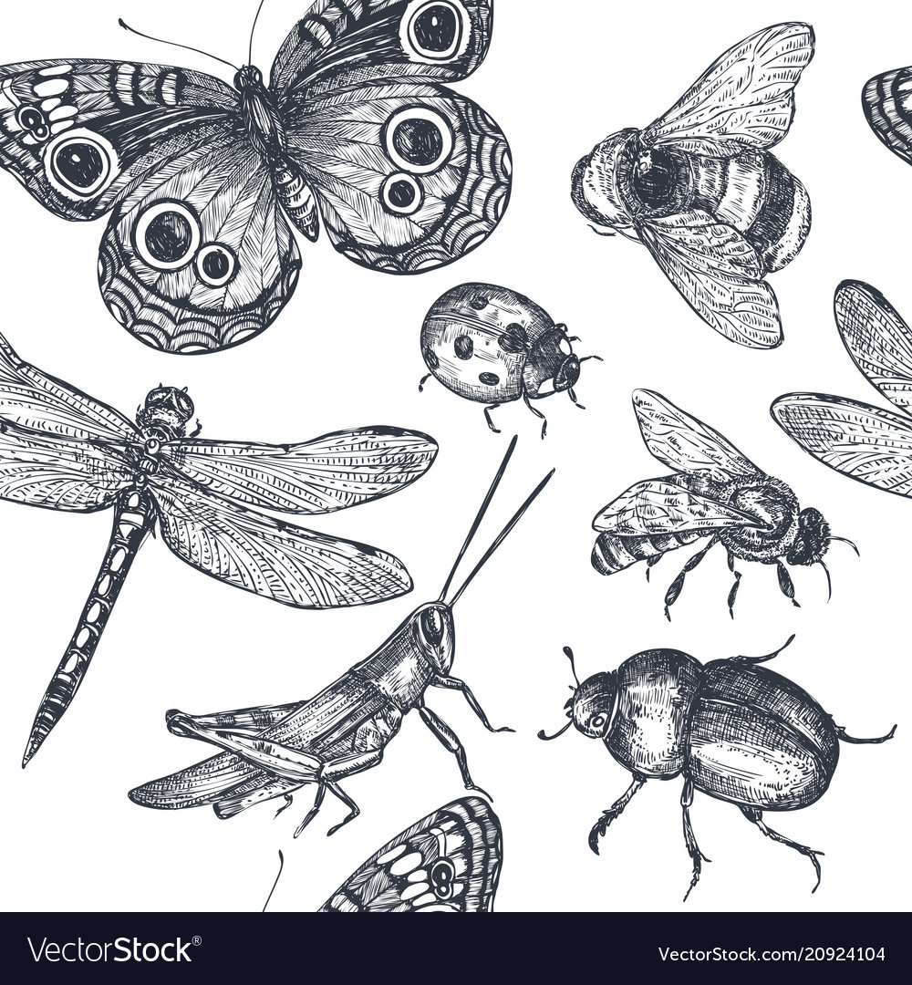 Insects sketch decorative seamless pattern