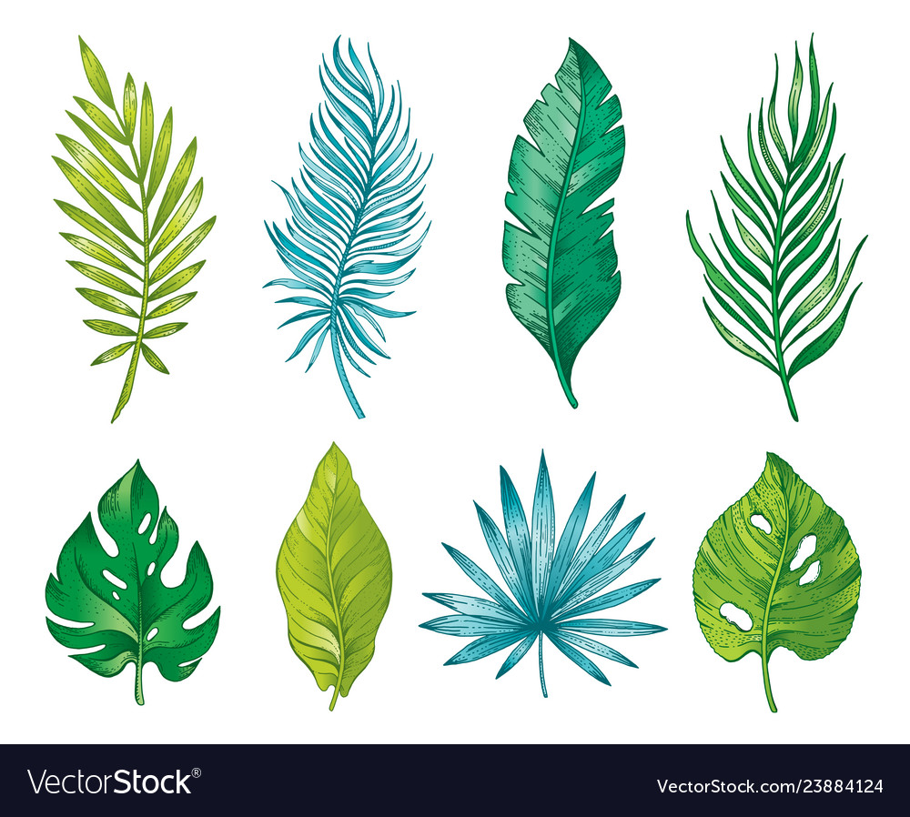 Palm tropical leaf branch hand drawn watercolor Vector Image