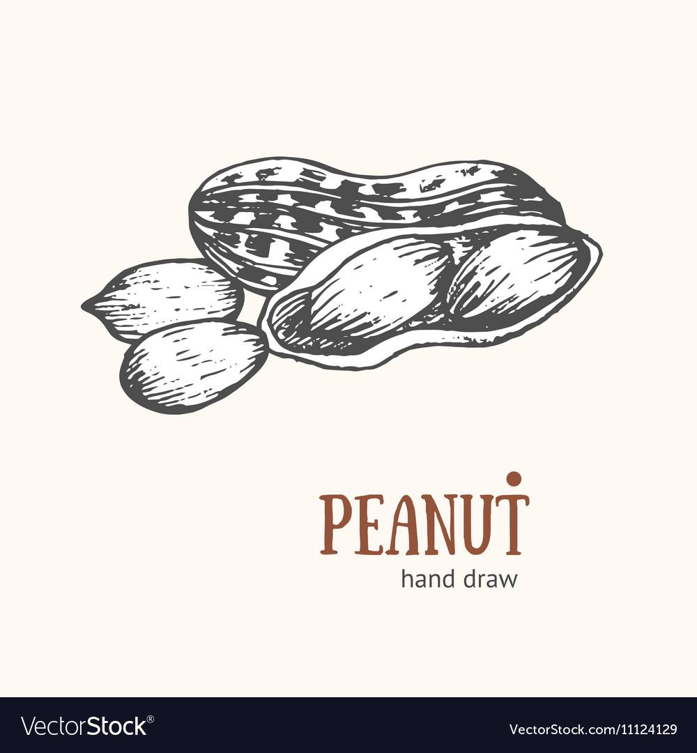 Peanut Card Hand Draw Sketch