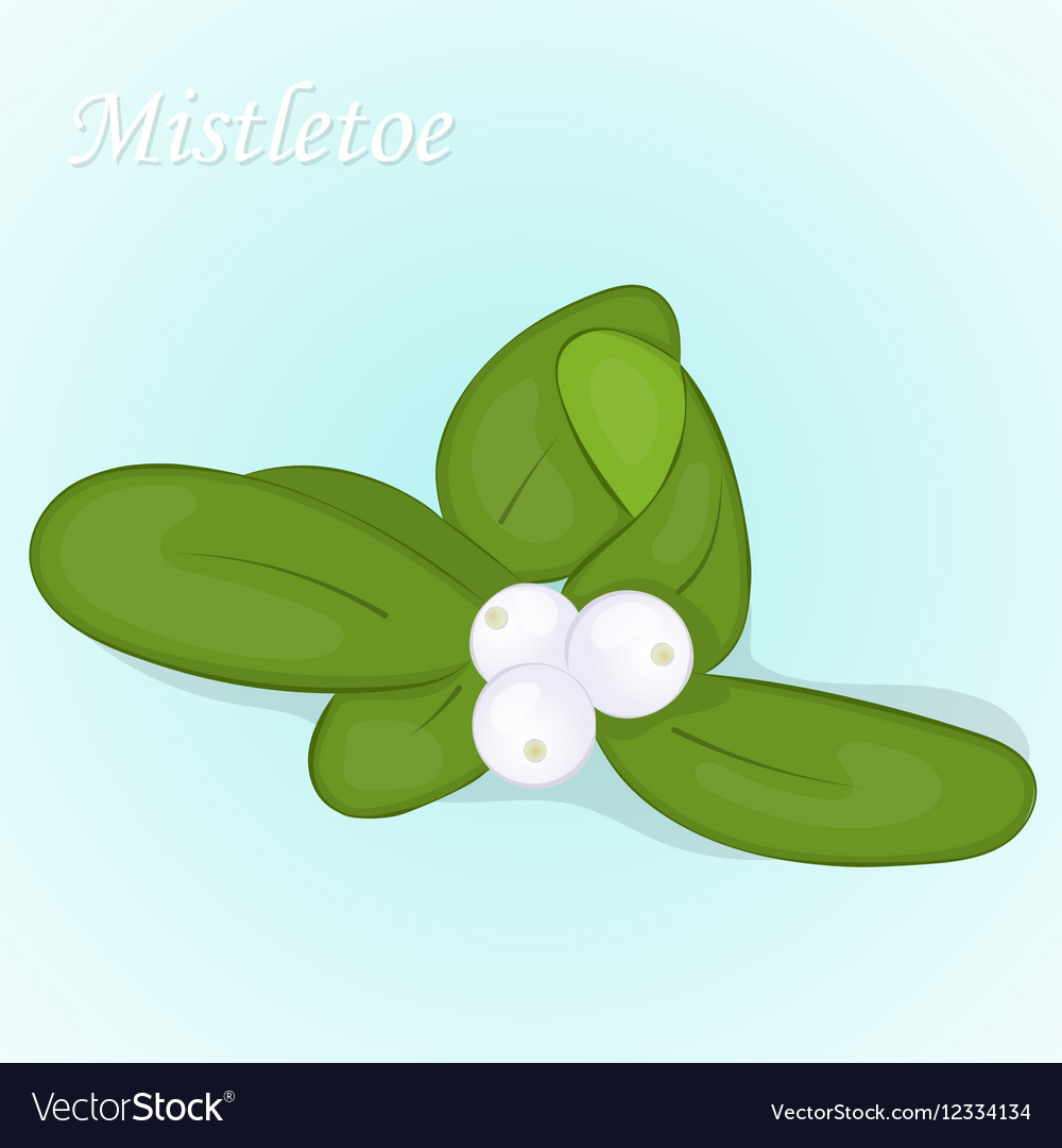Christmas mistletoe berry in simple cartoon style vector image