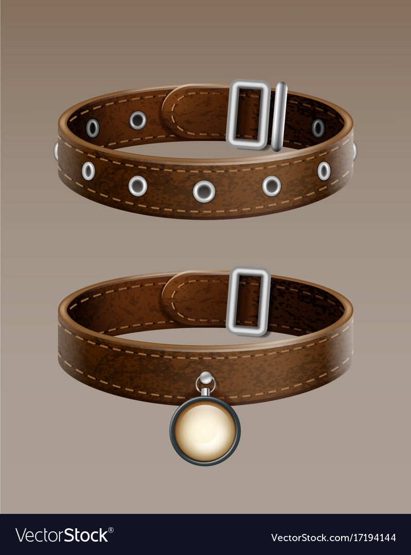 Leather collar vector image
