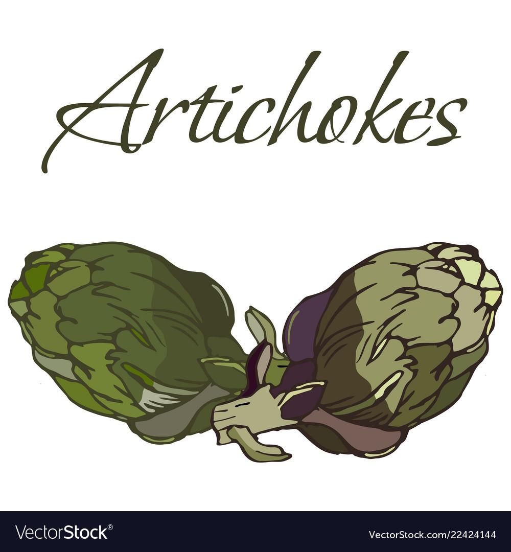 Tasty veggies artichokes