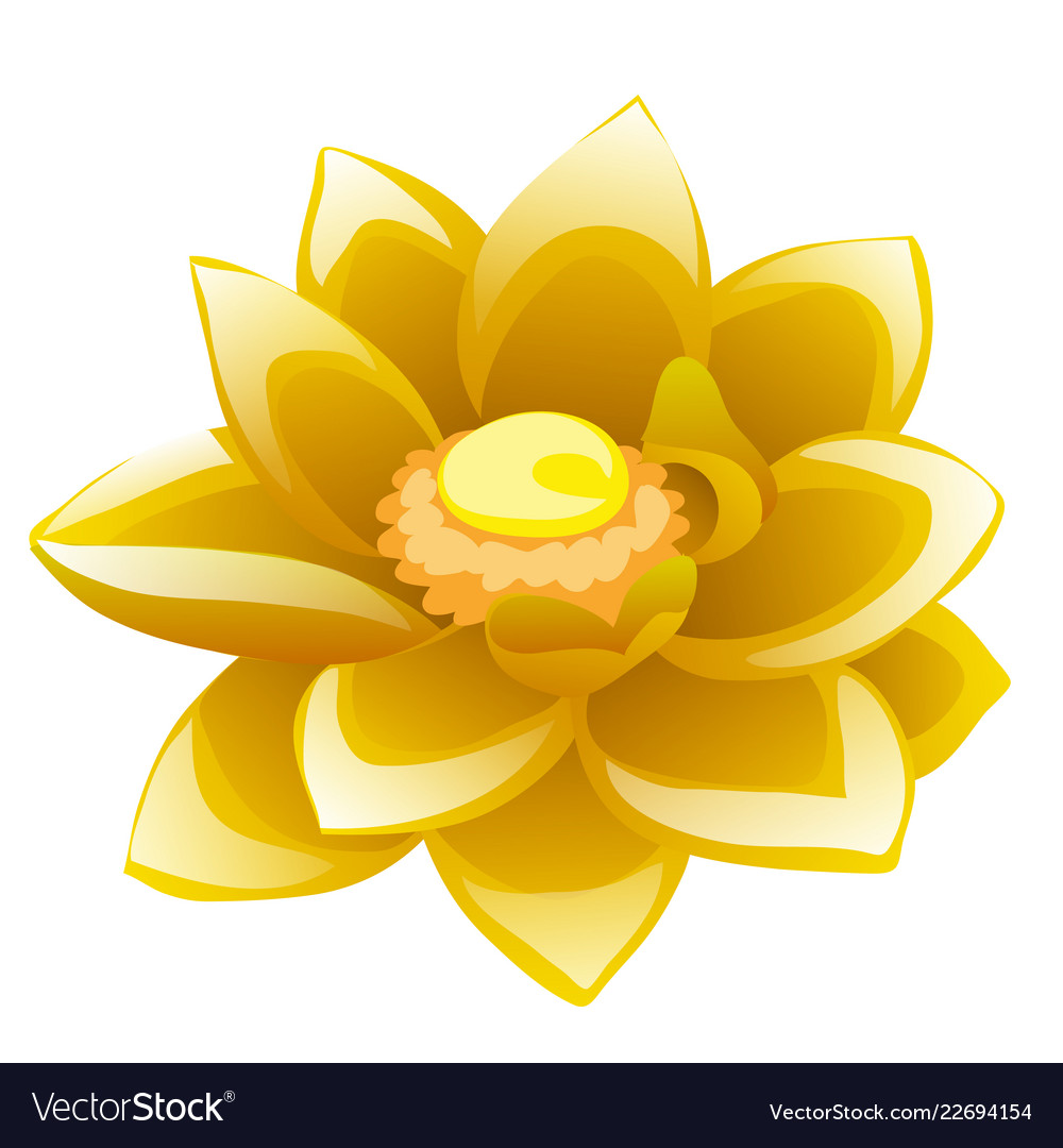 Cartoon Flower Yellow Lotus Isolated On White Vector Image