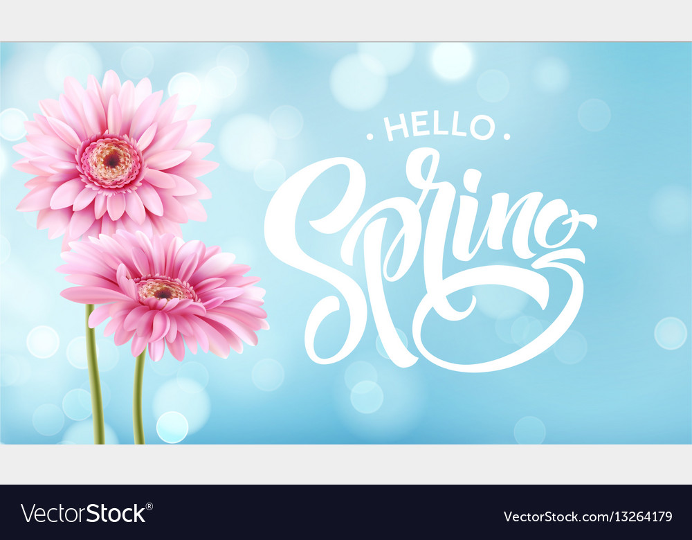 Gerbera flower background and spring lettering vector image