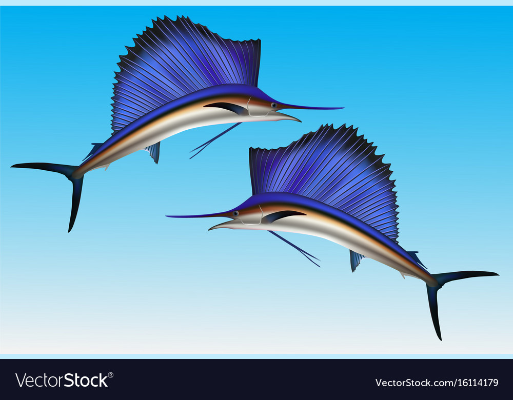 sailfish jumping out of water realistic royalty free vector