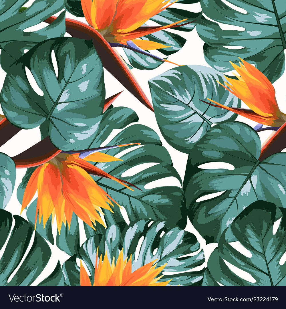 Tropical greenery philodendron monstera jungle