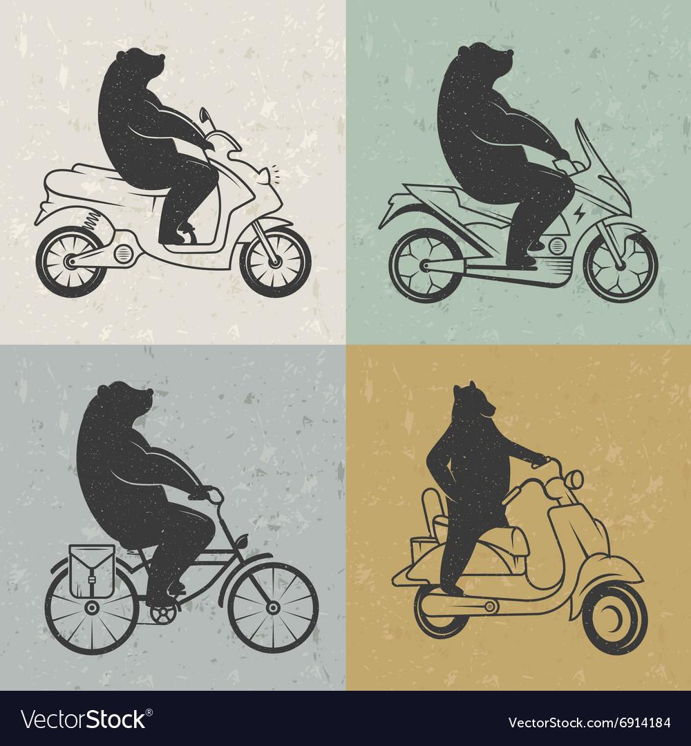 Vintage of Bear