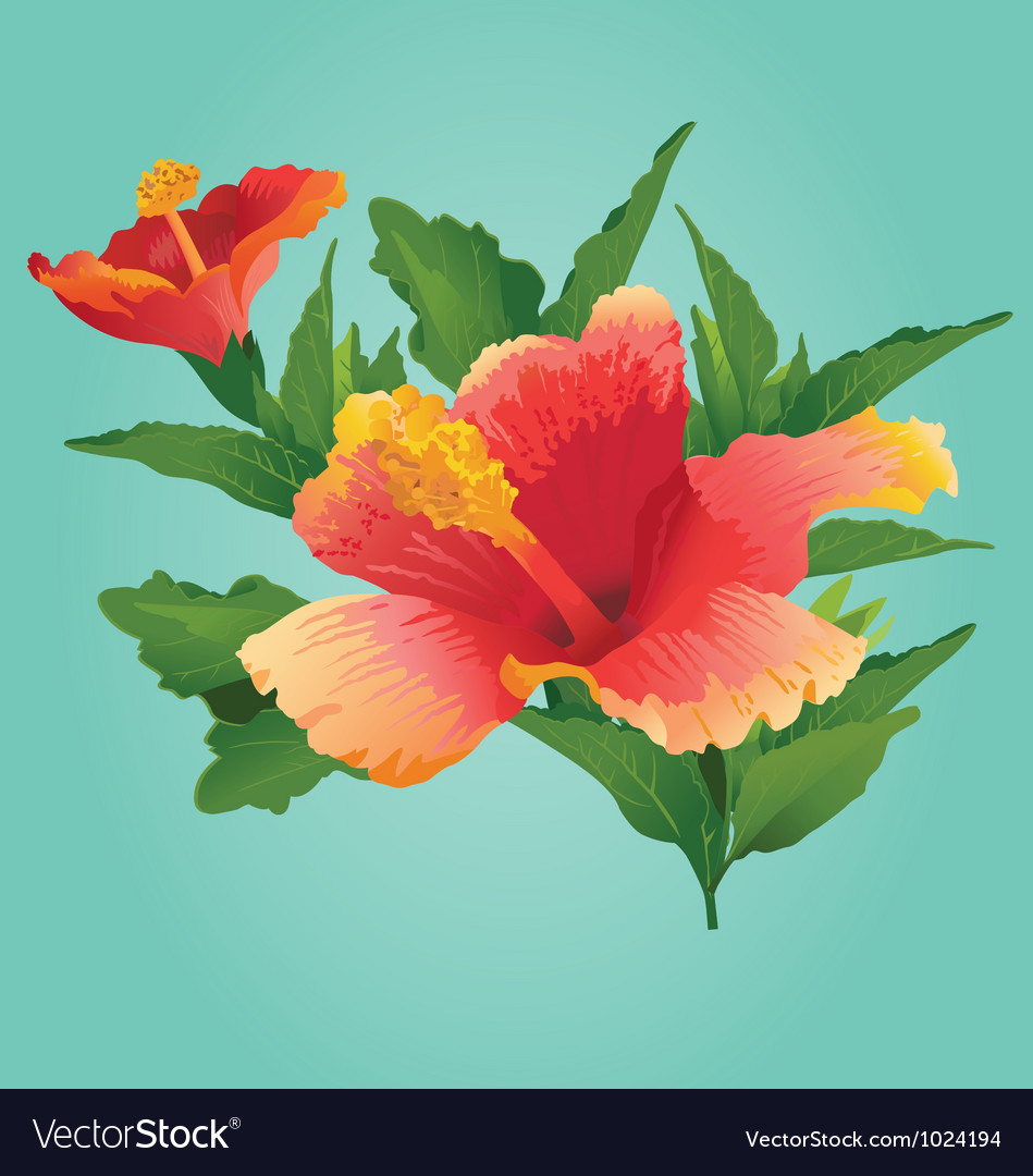 Sunset Hibiscus vector image