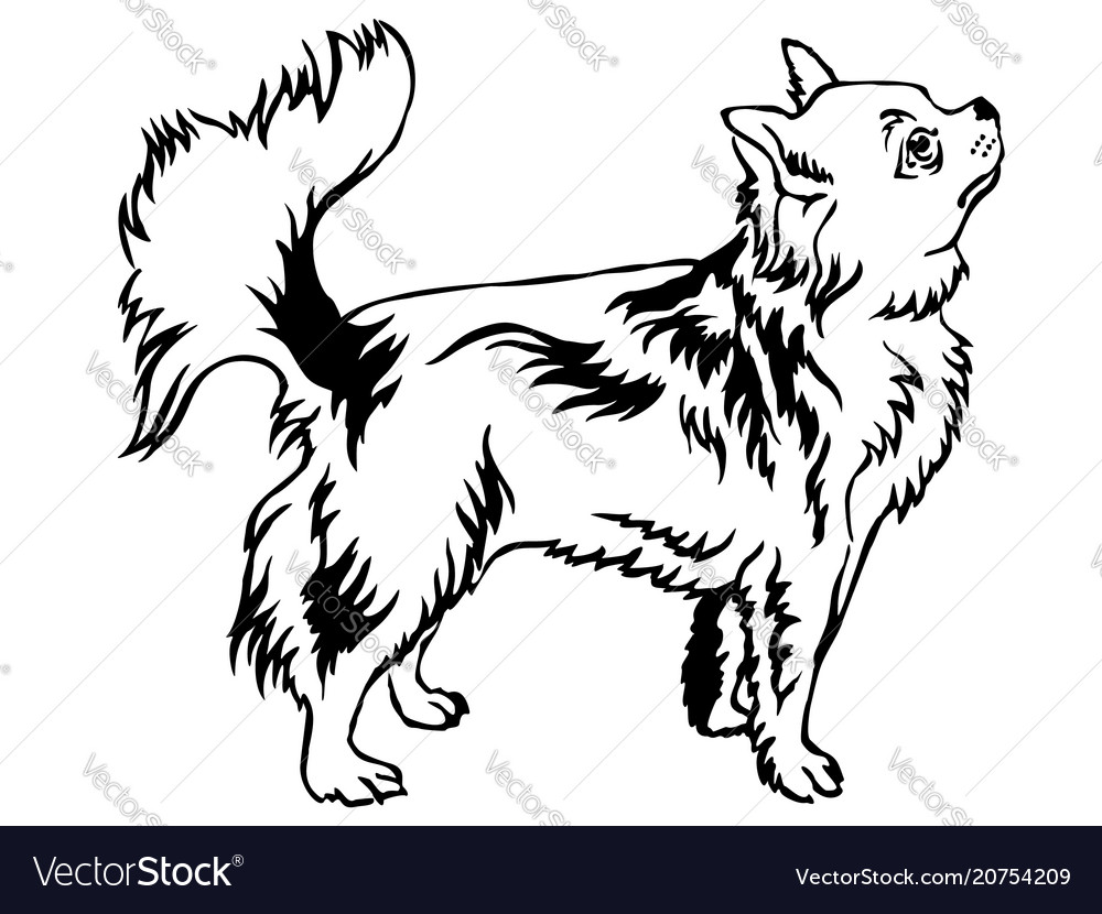 Decorative standing portrait of longhaired