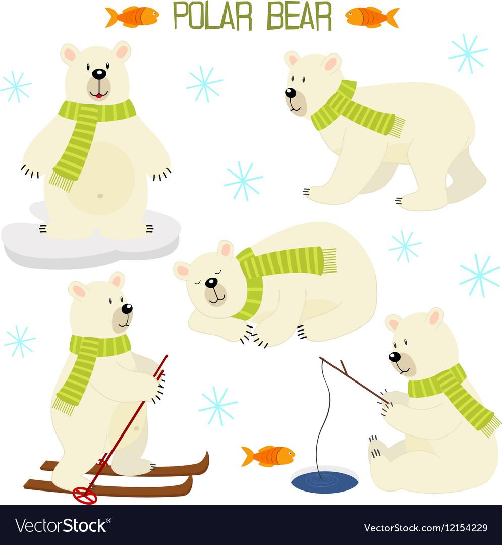 Set of isolated polar bear vector image