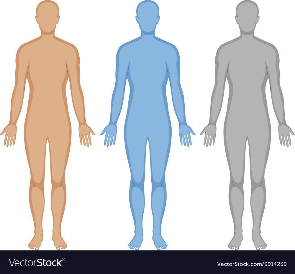human body systems outline Unit overview: homeostasis in human body systems unit plan humans are complex organisms that maintain a narrow set of internal conditions through a system of feedback and communication mechanisms between multiple organ systems.