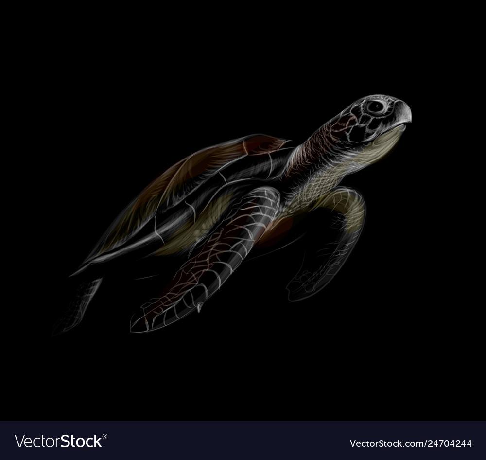 Portrait of a big sea turtle on a black background