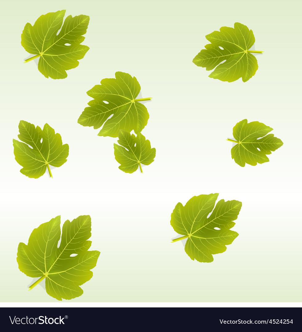 Fig Leaves Background Vector Image