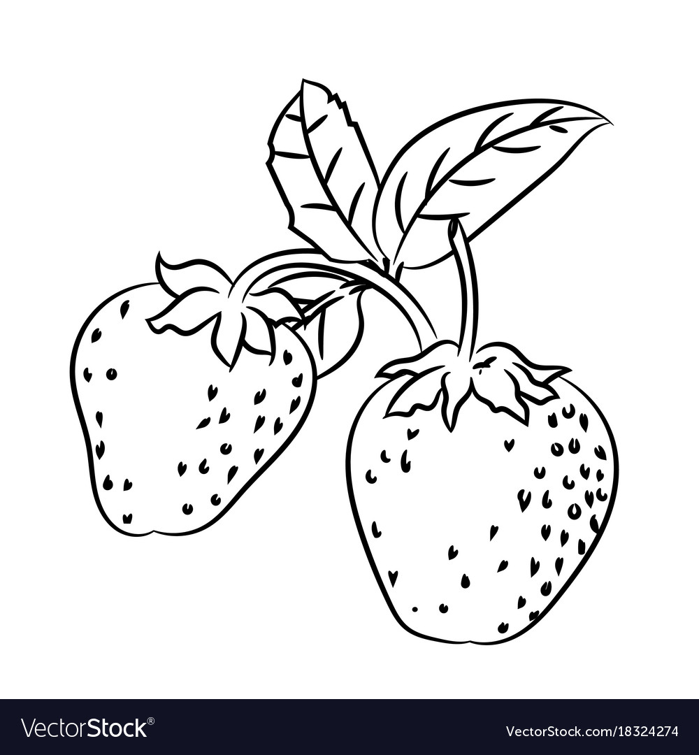 Line drawing of strawberry -simple line Royalty Free Vector