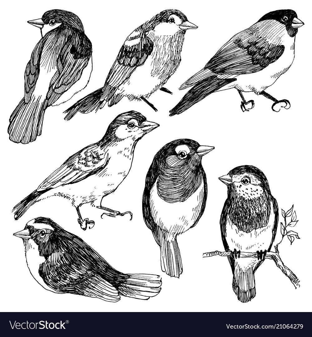 Graphic Set Of Hand Drawn Birds On White