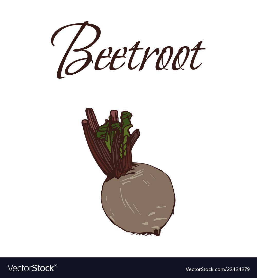 Tasty veggies beetroot