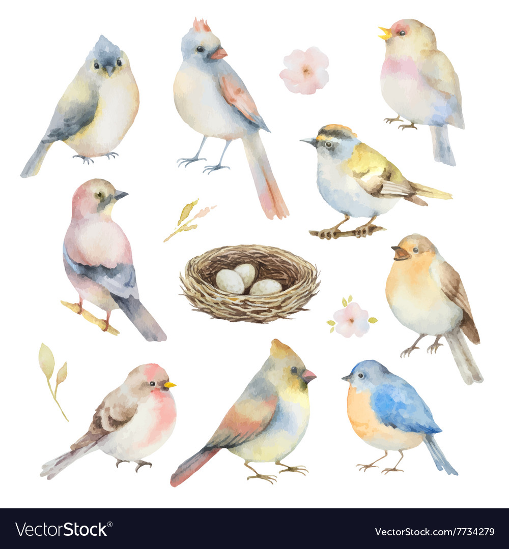 Watercolor set of birds vector image