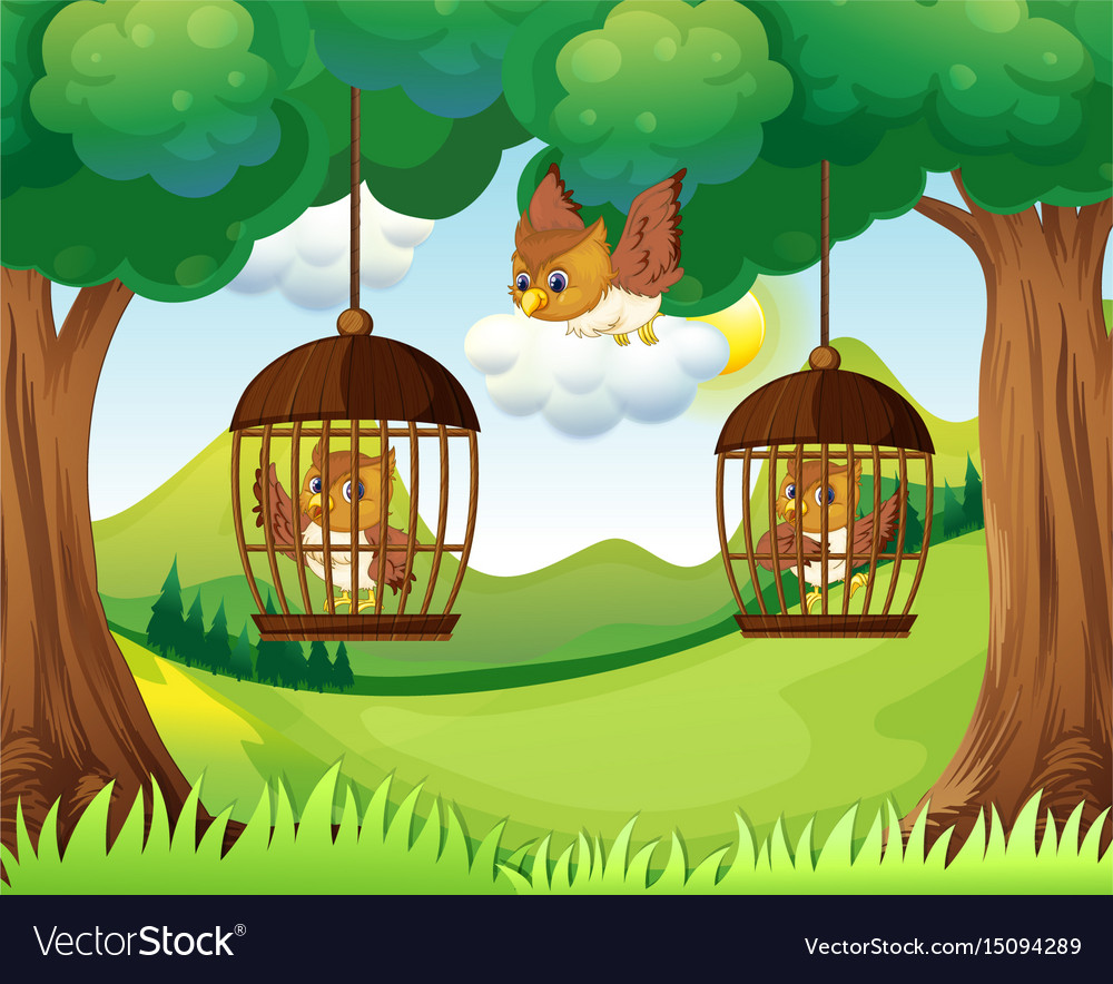 Owls in cages hanging on trees