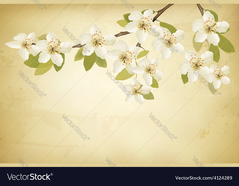 Spring branches with flowers on vintage background