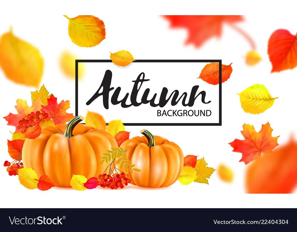 Background of orange autumn pumpkins