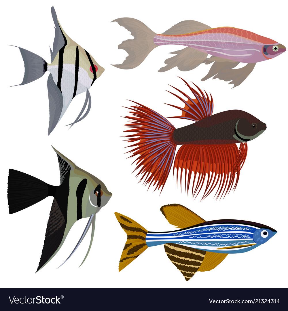 Set Of Cartoon Aquarium Fish Royalty Free Vector Image