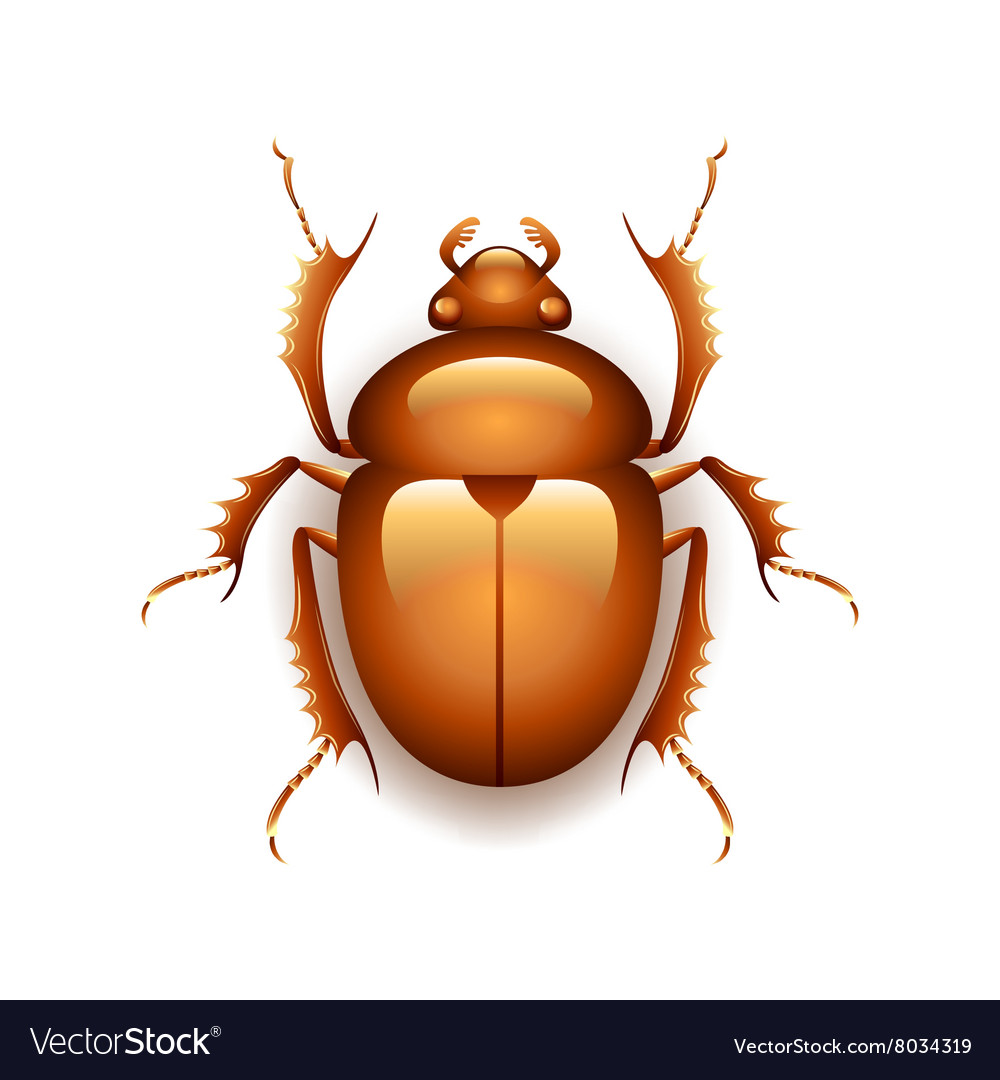 Egyptian scarab beetle isolated on white vector image