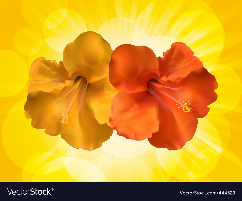 Hibiscus Flowers And Yellow Background Royalty Free Vector
