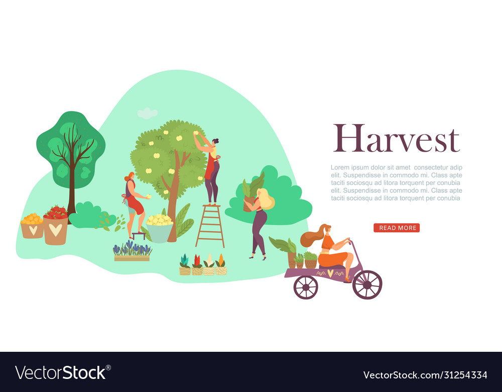 Autumn harvesting people fruit trees and basket