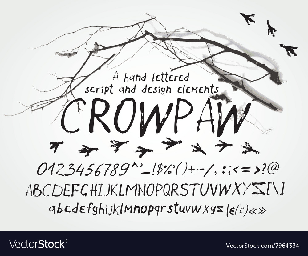 Hand script letters typeface and symbols vector image