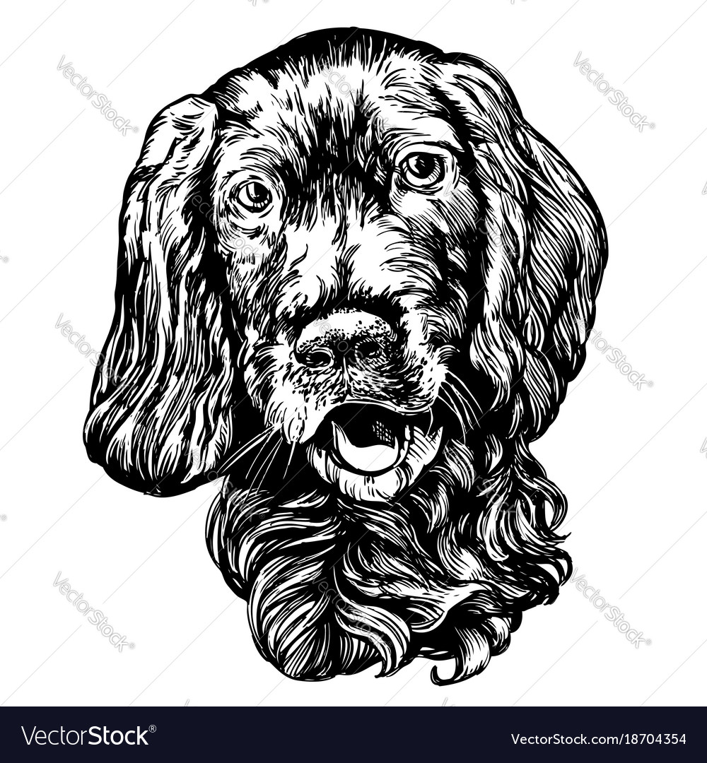 Dog spaniel pet hand drawn