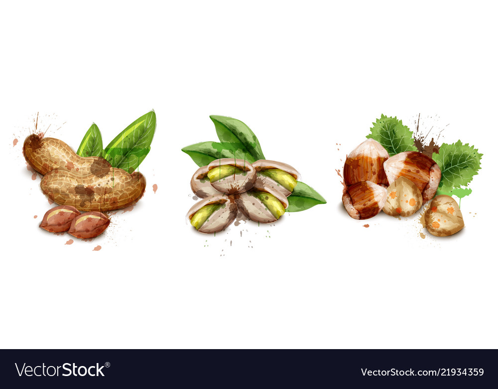 Nuts set watercolor pistachio hazelnut