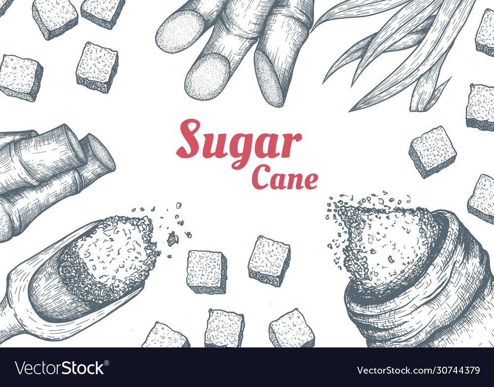 Collection sugarcane cane sugar and sugarcane
